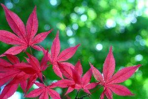 Pequeños árboles de Color de otoño