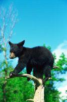 Maneras de mantener a los osos lejos de comederos para pájaros