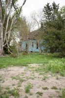 Manchas marrones en la St. Augustine Grass
