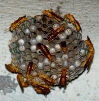 Cómo realizar un retiro de nido de abeja
