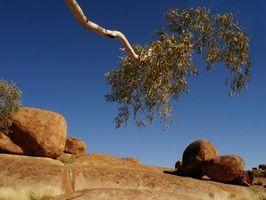 Cortina de árboles amor en Australia