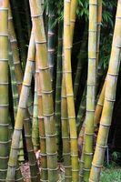 ¿Qué causas bambú pisos a deformación?