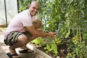 Clave dicotómica: Plantas de jardín común
