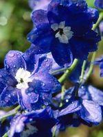 ¿Qué flores usar para un ramo de hierba doncella