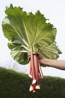 Pesticida orgánico casero para verduras