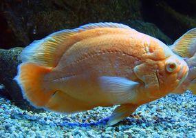 ¿Cuánto pescado filtros de último?