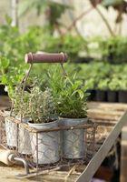 ¿Qué retención de agua polímeros de plantas del envase?