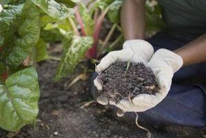 Cómo transferir las semillas germinadas con una toalla de papel