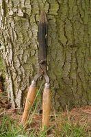 ¿Puede recortar árboles cuando la savia está subiendo?