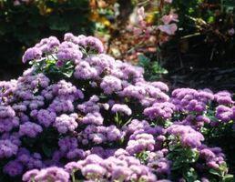 Flores que florecen todo el verano