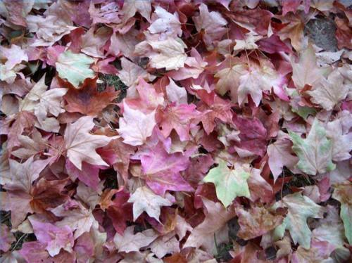 Instrucciones del soplador de hojas