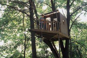 ¿Puede construir una casa de árbol en una palmera?