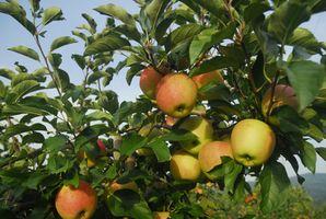 Fertilizantes con ácidos húmicos y vitamina C