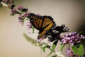 Colgante mariposa decoraciones