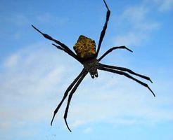 Plantas repelentes de la araña