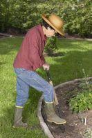 La mejor época para plantar arbustos en zona 7