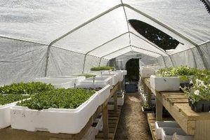 ¿Por qué las plantas crecen mejores en invernaderos?