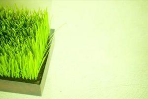 Cómo quitar y plantar césped