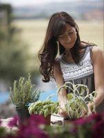 Cómo cubrir el suelo con la planta en un jardín