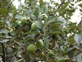 Sombra y árboles frutales