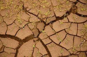 Condiciones de suelo alcalino