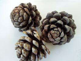 Ideas de decoración para el otoño