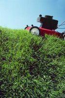 Cómo cortar pasto espeso