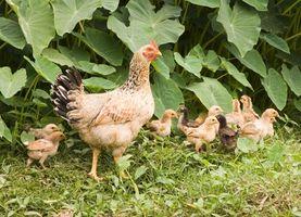 ¿Qué se puede hacer con una granja de dos hectáreas?