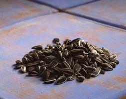 ¿Usted puede alimentar el asado las semillas de girasol para aves?