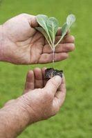 Guía de jardín de la semilla