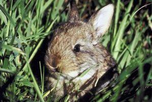 Ideas caseras para mantener los conejos fuera de jardines