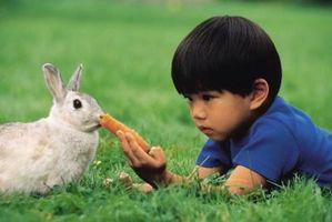 Bolas de naftalina para repeler a los conejos