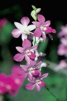 ¿Cómo afecta el clima orquídeas?