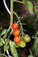 Las mejores verduras que crecen en contenedores