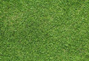 Bermuda Herbicidas Césped Para Herbicidas Para Césped Herbicidas Césped Para Para Césped Bermuda Bermuda Herbicidas TJcl3KuF1