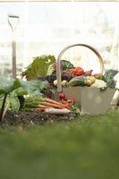 Preparación de la primavera en el suelo para la siembra de hortalizas