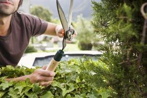 Regalos de jardinería verde
