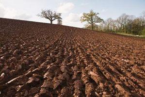 Cinco principales factores implicados en la formación del suelo