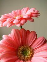 Cómo montar las flores secas