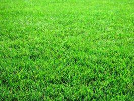 Sobre la hierba que crece en la sombra