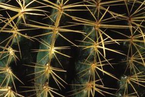Repelentes de insectos para un Cactus