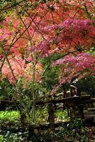 Finales temporada jardín plantas
