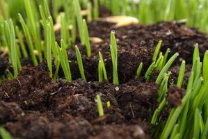 Lo que cubrir nuevas semillas de césped con
