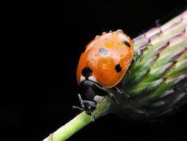 Insectos beneficiosos para los jardines en el norte de Florida