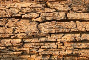 Definición de consolidación de la madera