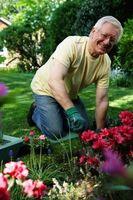 Cómo acidificar el suelo orgánico