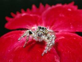 Arañas blancas en Miami