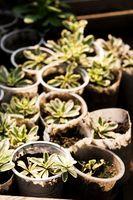 Cómo hacer crecer plantas nuevas de otra planta