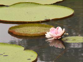 Técnicas de flor de loto