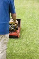 ¿Debo cortar hierba antes de la fertilización?
